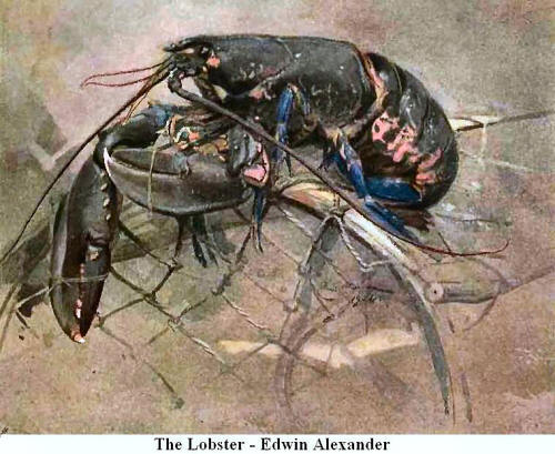 The Lobster. By Edwin Alexander