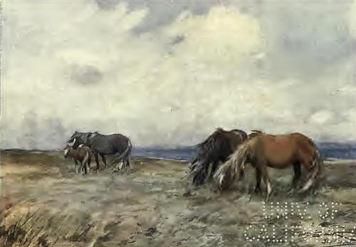Shetlanders