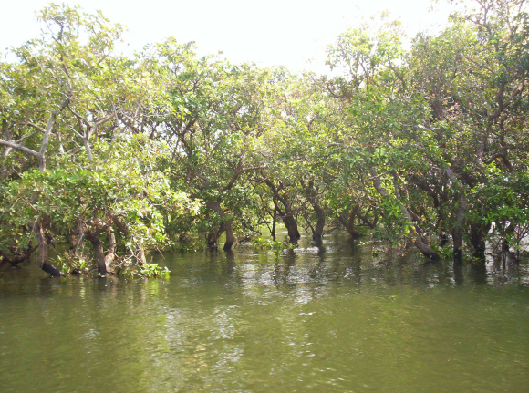 external image 24.19a%20Flooded%20forest.jpg
